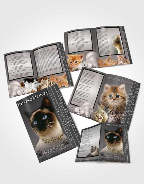4 Page Grad Obituary Template Brochure Black and White Fluffy Kitty